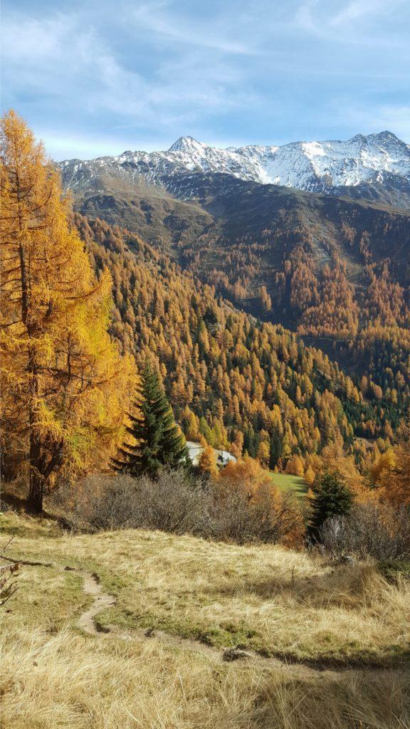 Buntgefärbte Wälder, Foto: Sabine Hechenberger