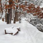 Schneelandschaft Zell am See