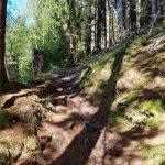 Waldweg Richtung Plettsaukopf ,Foto: Sabine Hechenberger