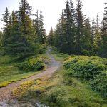 Wanderweg durch einen kleinen Wald, Foto: Sabine Hechenberger