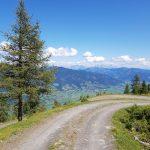 Perfekter Forstweg für den Retourweg, Foto: Sabine Hechenberger