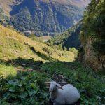 Auch auf ein Schaf sind wir getroffen, Foto: Sabine Hechenberger