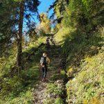 Kleine Holztreppen am Weg zum Glocknerblick, Foto: Sabine Hechenberger