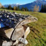 Holzstapel neben der Straße, Foto: Sabine Hechenberger
