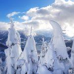 Tief verschneite Bäume auf der Schmittenhöhe, Foto: Sabine Hechenberger
