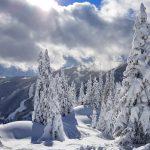 Schneebedeckte Bäume im Skigebiet Schmittenhöhe in Zell am See, Foto: Sabine Hechenberger
