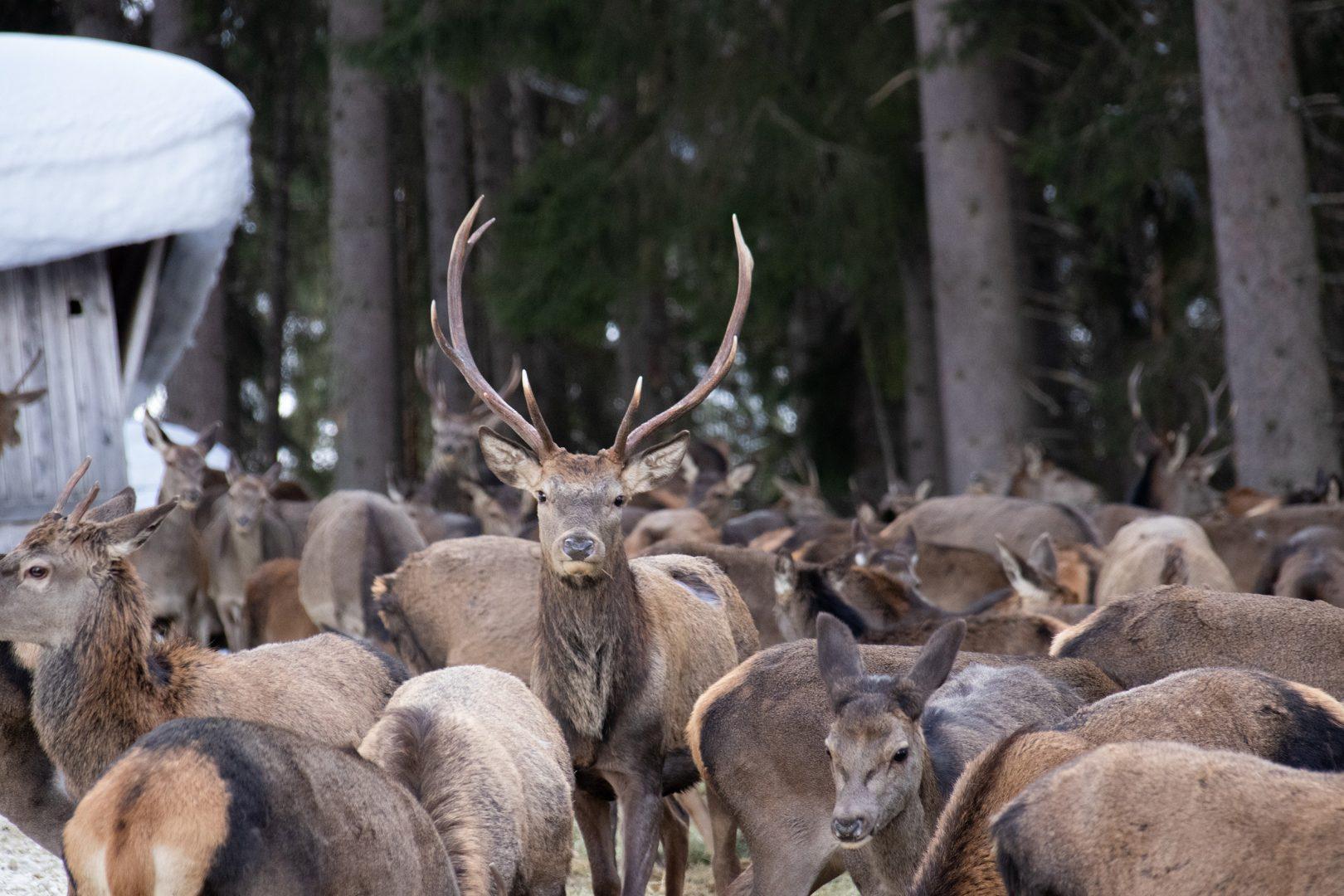Wildtierfütterung