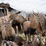Wildtiere hautnat erleben, Foto: Nadine Dreiseitl