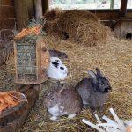Hasen im Wildpark Ferleiten, Foto: Sabine Hechenberger