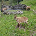Großzügige grüne Areale für alle Tiere, Foto: Sabine Hechenberger
