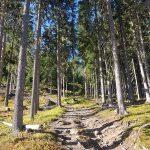 Wanderpfad hoch zur Zunigalm, Foto: Sabine Hechenberger