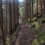 Gut markierte Wanderwege zur Erlhofplatte, Foto: Sabine Hechenberger