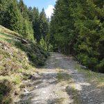 Wander-Forstweg zur Pinzgauer Hütte, Foto: Sabine Hechenberger