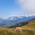 Grandioses Bergpanorama unterhalb des Gipfels, Foto: Sabine Hechenberger