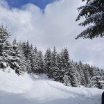 Schneeschuhwandern auf der Forstraße Richtung Schützingalm,Foto: Sabine Hechenberger