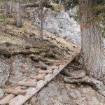 Holzsteig