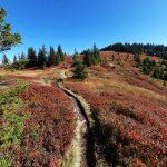 Saalachtaler Höhenweg im Herbst, Foto: Sabine Hechenberger
