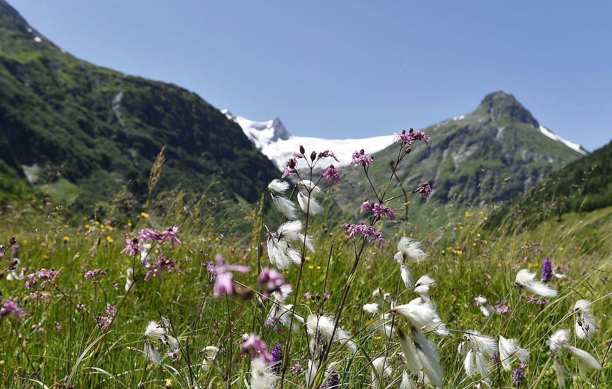 Prächtige Blumenwiese am Gletscherweg Innergschlöss