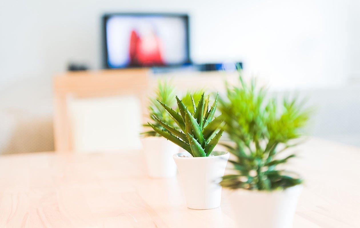 Grüne Pflanze steht am Couchtisch im Apartment