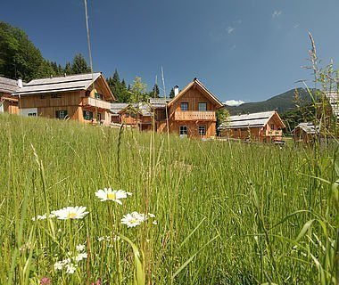 Grüne Wiese mit Frühlingsblumen und im Hintergrund sieht man die traditionellen Ferienhäuser der Hagan Lodge