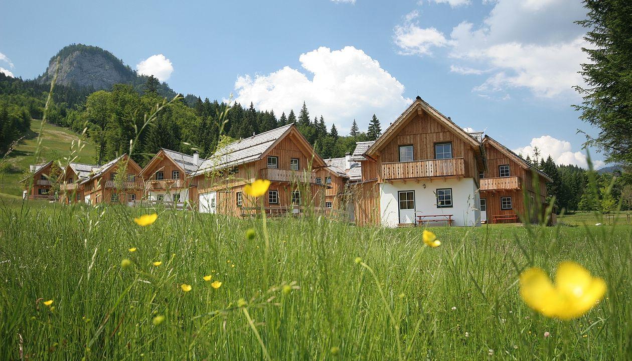 Viele Lodges stehen in einer Wiese voll mit gelben Blumen und im Hintergrund sieht man den Berg Loser